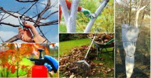 сухие листья, дерево, ветки, тачка