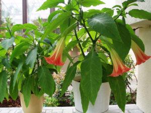 цветок в горшке, подоконник