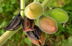 плоды, ветки