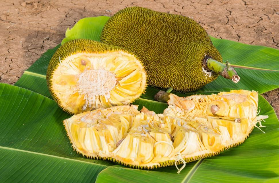 Сезон джекфрута в Таиланде