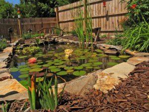 пруд с кувшинками во дворе дома