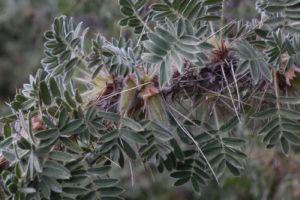 зеленые пушистые листья, ветка