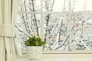 цветок, горшок, окно, снег, деревья