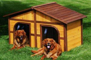 будка, собаки, трава