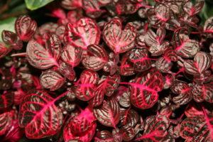 листья красно-коричневые