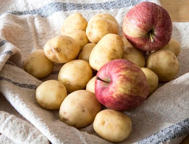 Яблоки хранят с картофелем