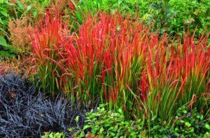 растения с листьями разных цветов