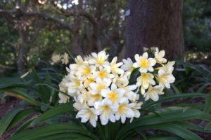 зелень, белые цветы, деревья