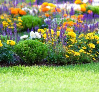 клумба, цветы, поляна