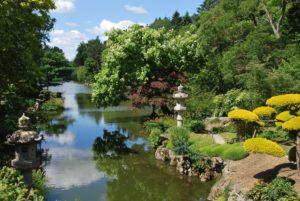 парк, пруд, растения