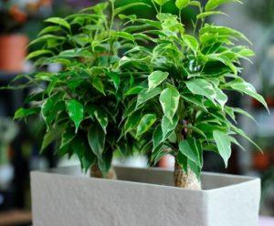 растения, горшок