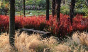 красное растение, деревья, поляна, лавочка