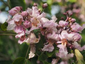 ветка, розовые цветы