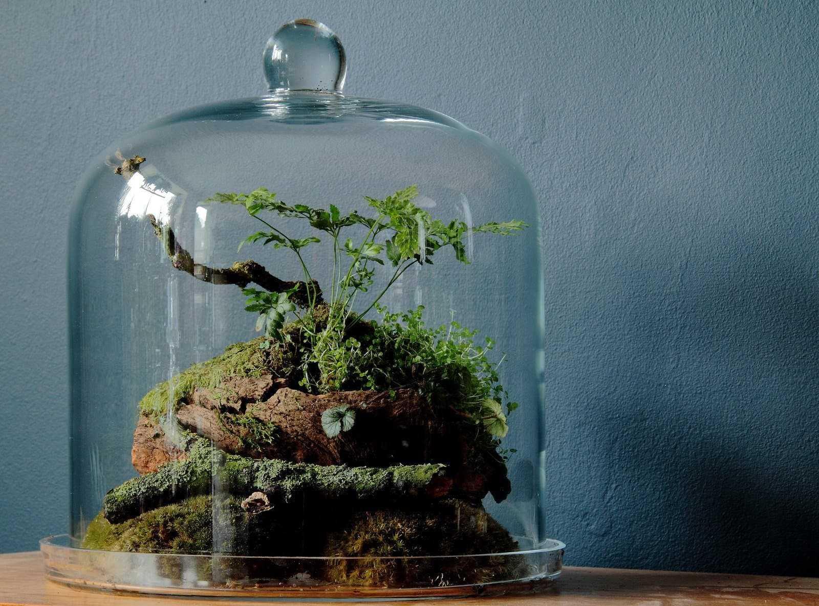 Флорариум растительный