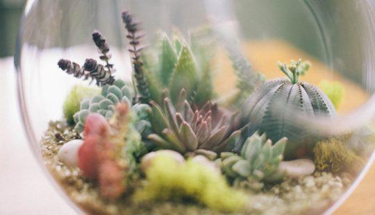 Растительные террариумы и Флорариумы
