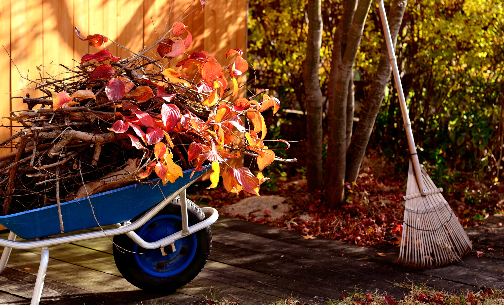 листья, тачка, дерево