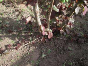почва, куст