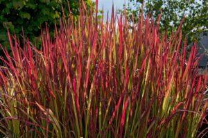 листья красного и зеленого цветов