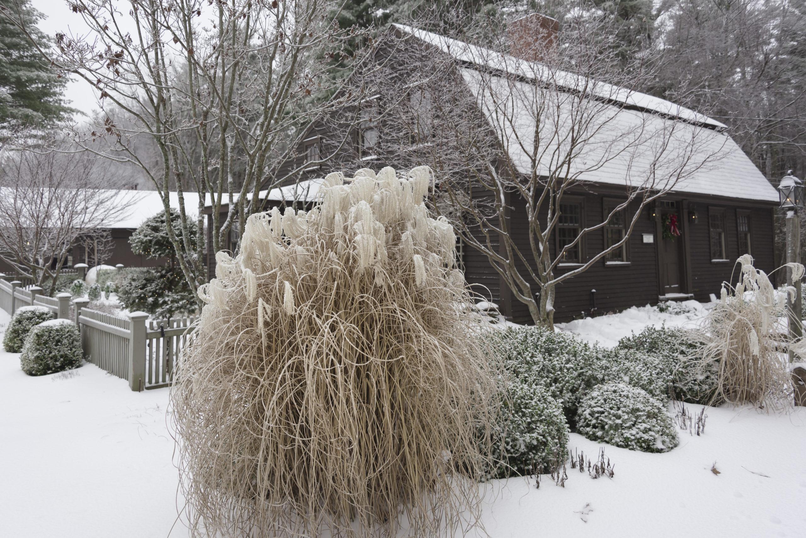 растения, снег, дом