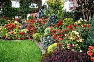цветы, деревья, кустарники