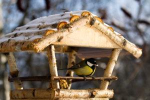 птица, кормушка, снег