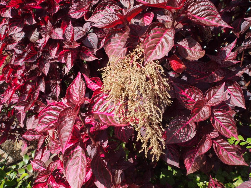 красные листья с цветами