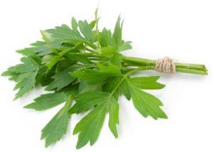 зеленое растение, пучок
