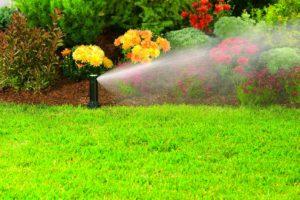 газон, цветы, вода