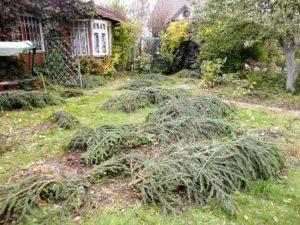 еловые ветки, двор, дом, растения, клумбы