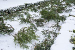 снег, растения