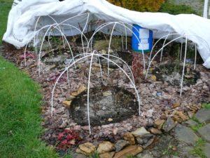 кустарники, камни, сад
