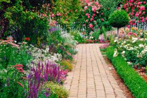 цветы, дорожка
