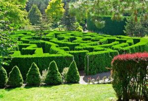 лабиринт, зелень, деревья