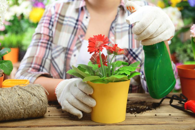 Аспирин настоящая находка для цветов