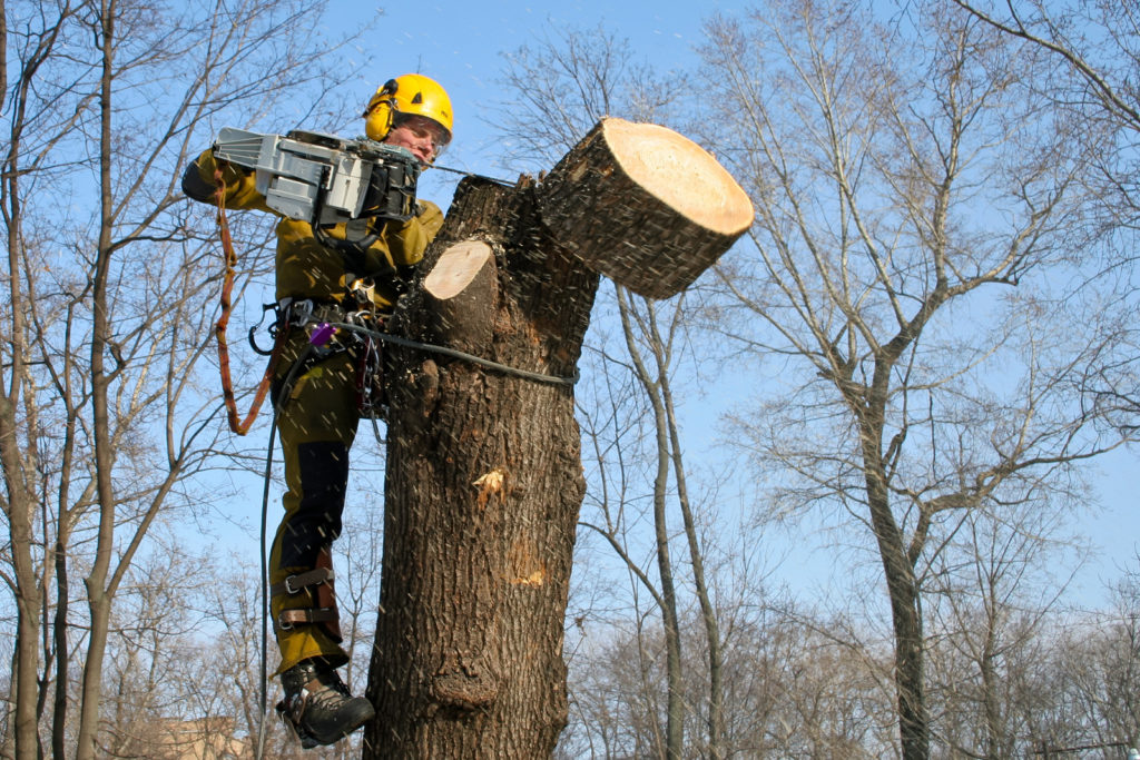 Срубил дерево на своем участке
