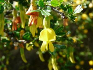 желтый цветок, ветки, зеленые листья