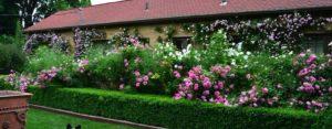 дом, кустарники с цветами