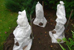 кустарники, белое покрытие, почва