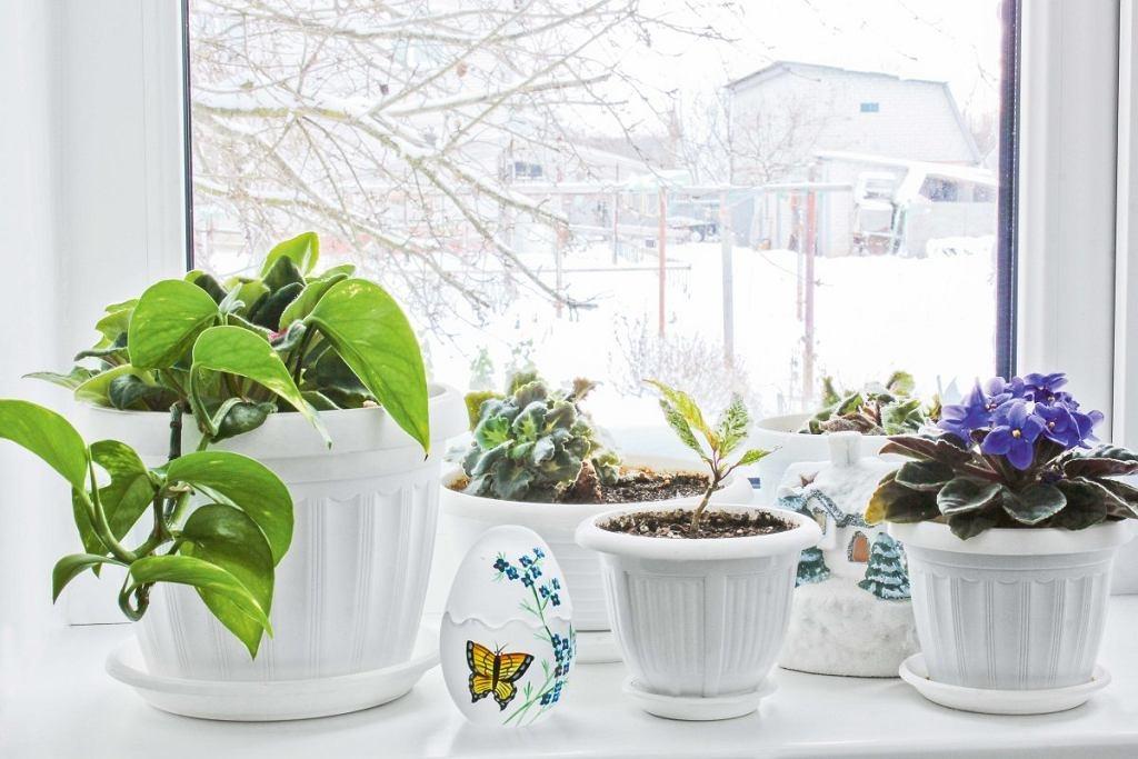 цветы, горшки, подоконник, окно, снег