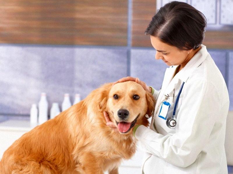 Моя подруга ветеринар