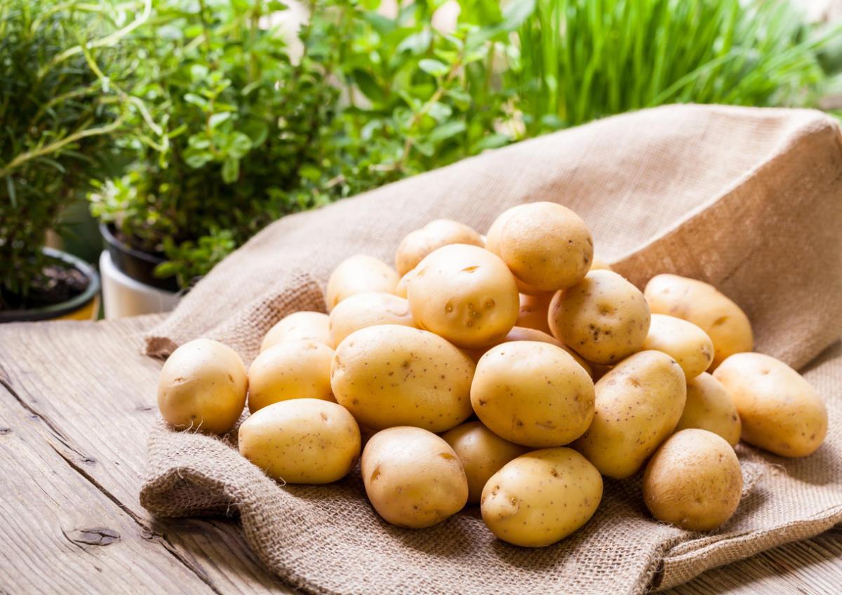Польза и вред картофеля для здоровья