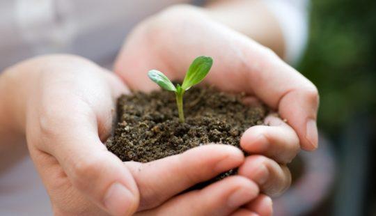 Какие растения запрещено выращивать