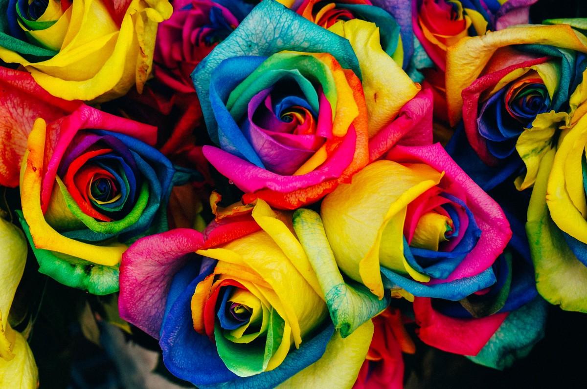 Какого цвета бывают розы и что означает цвет