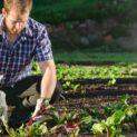 Что не стоит сажать на огороде