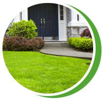Красивый декоративный газон для вашего участка