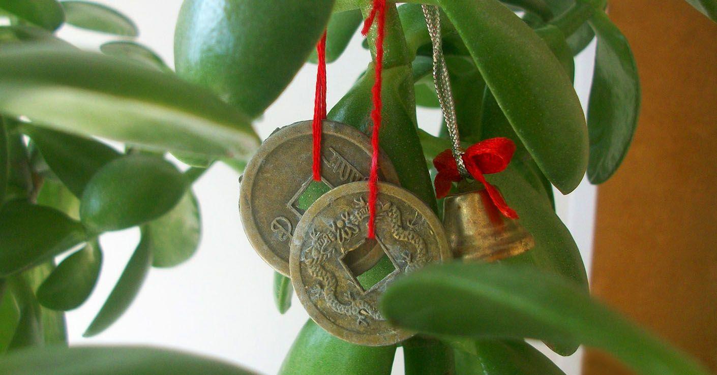 Растения приносящие богатство