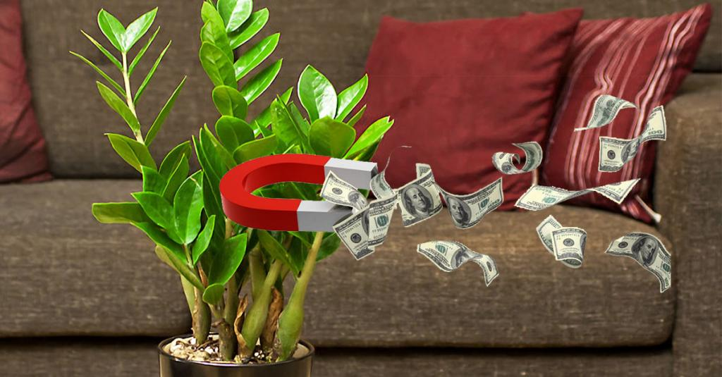 Растения приносящие деньги