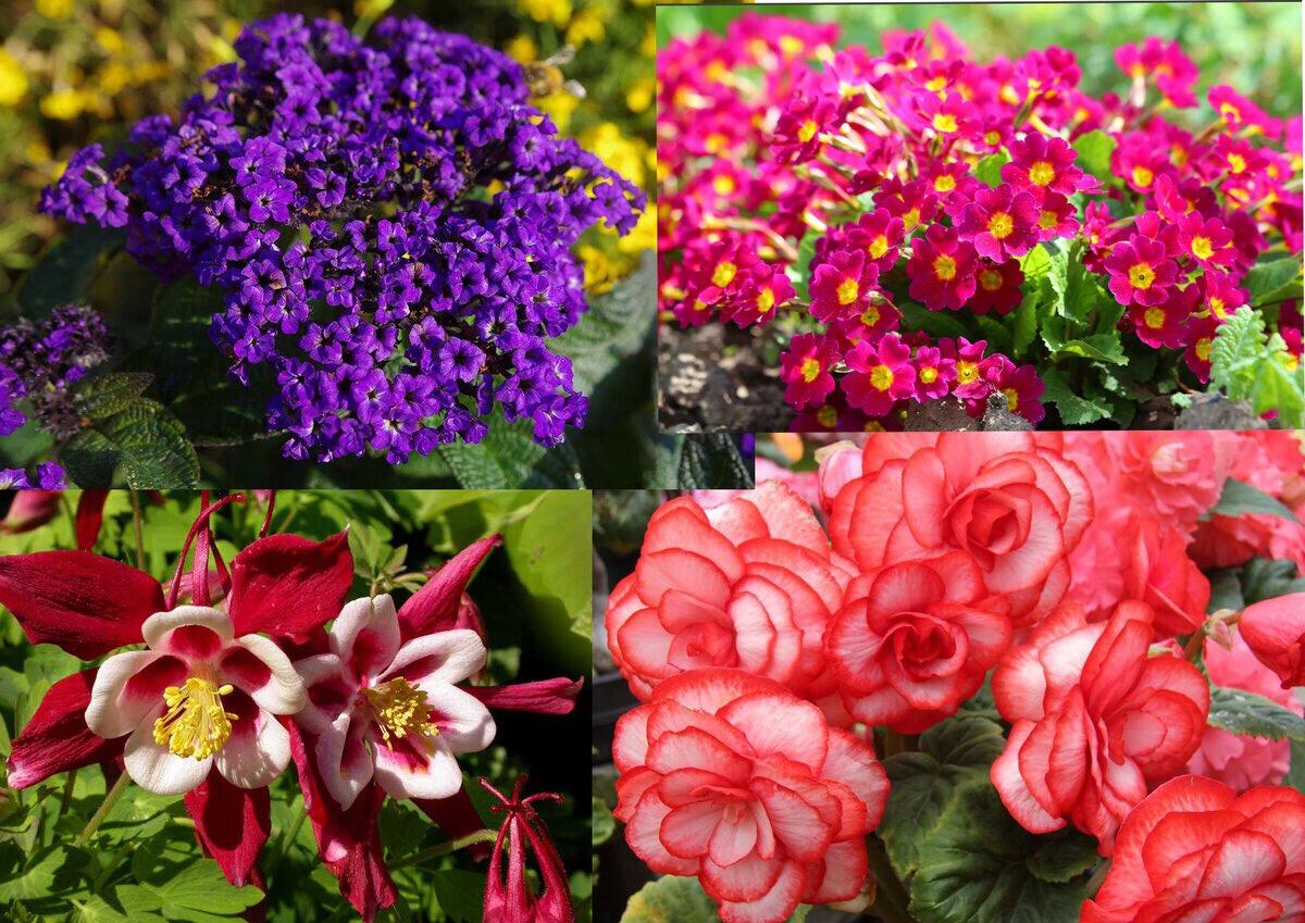 цветы для посадки в январе