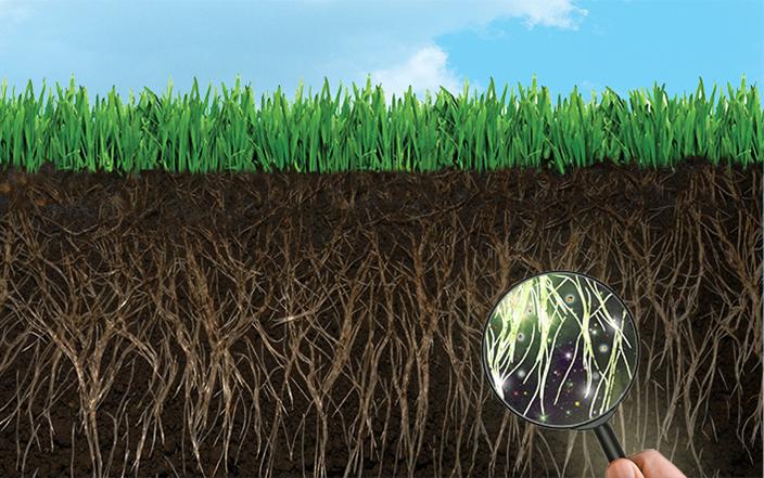 Микроорганизмы в почве