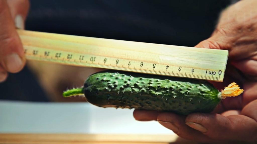 Корнишонные около 10 см